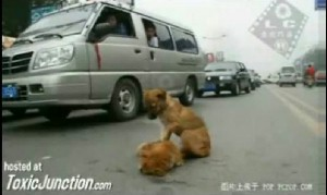 Dog Mourns Mate